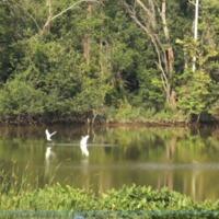 Anacostia River Photo.PNG